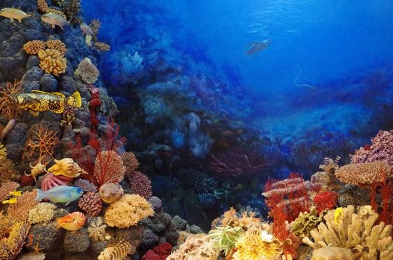 Three Best Dive Sites in Bali for Deep Diving